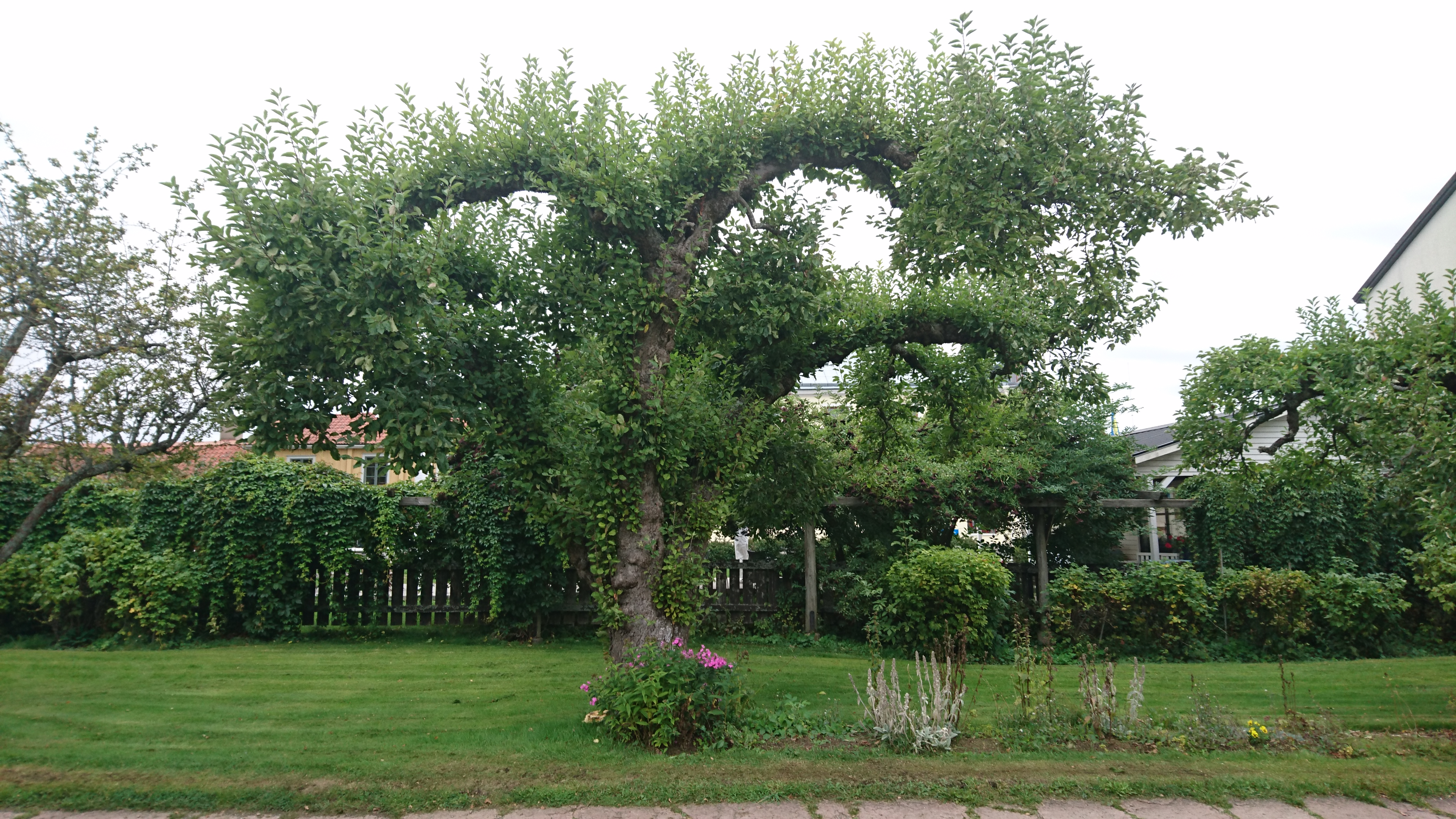 Beskuret träd